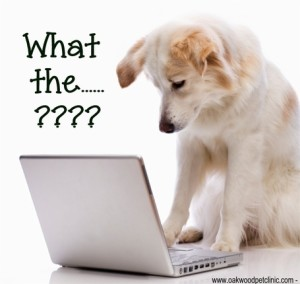 confused-dog-computer_medium